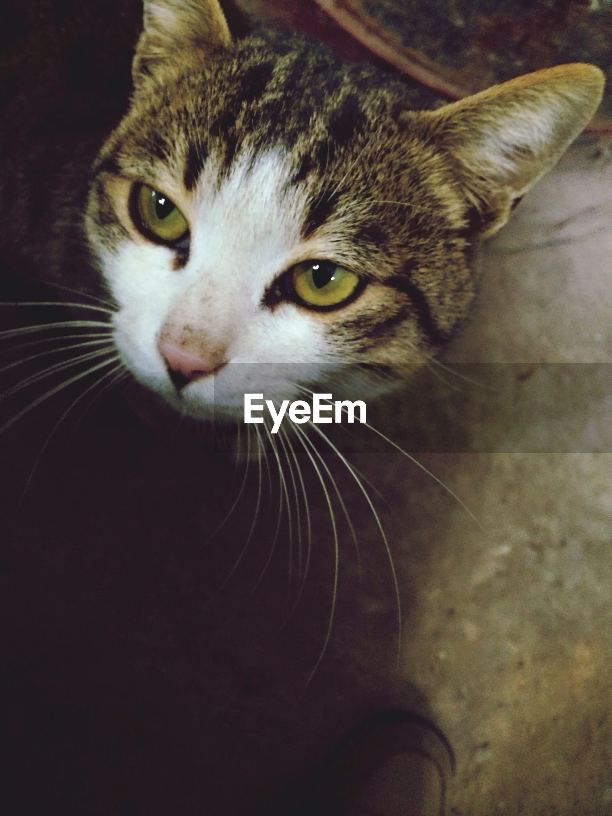 one animal, pets, animal themes, domestic animals, domestic cat, indoors, cat, looking at camera, mammal, portrait, feline, whisker, animal head, close-up, animal eye, alertness, staring, high angle view, no people, black color