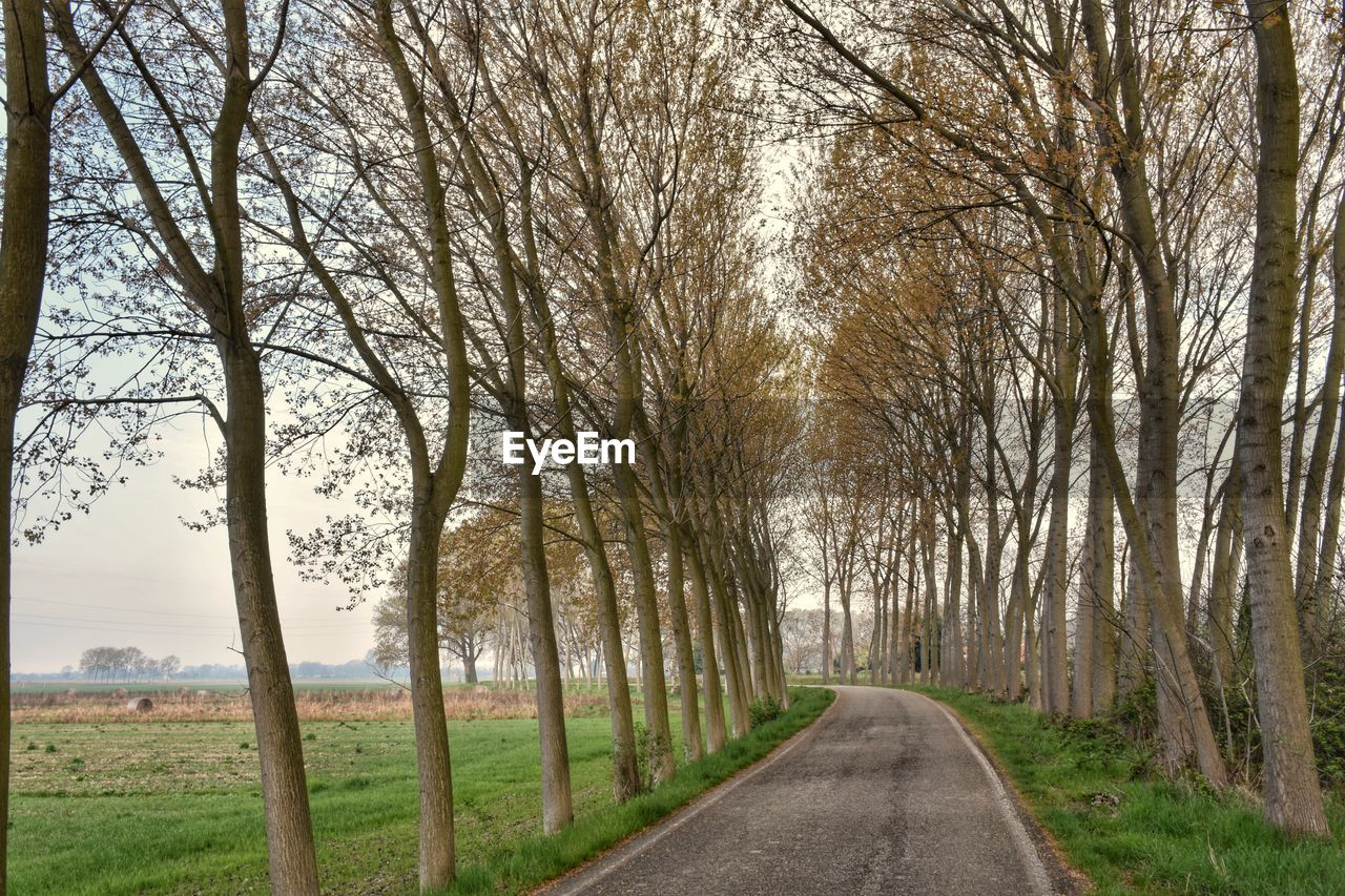 the way forward, bare tree, road, tree, nature, tranquility, tranquil scene, outdoors, scenics, branch, transportation, no people, day, beauty in nature, landscape, grass, single lane road, sky