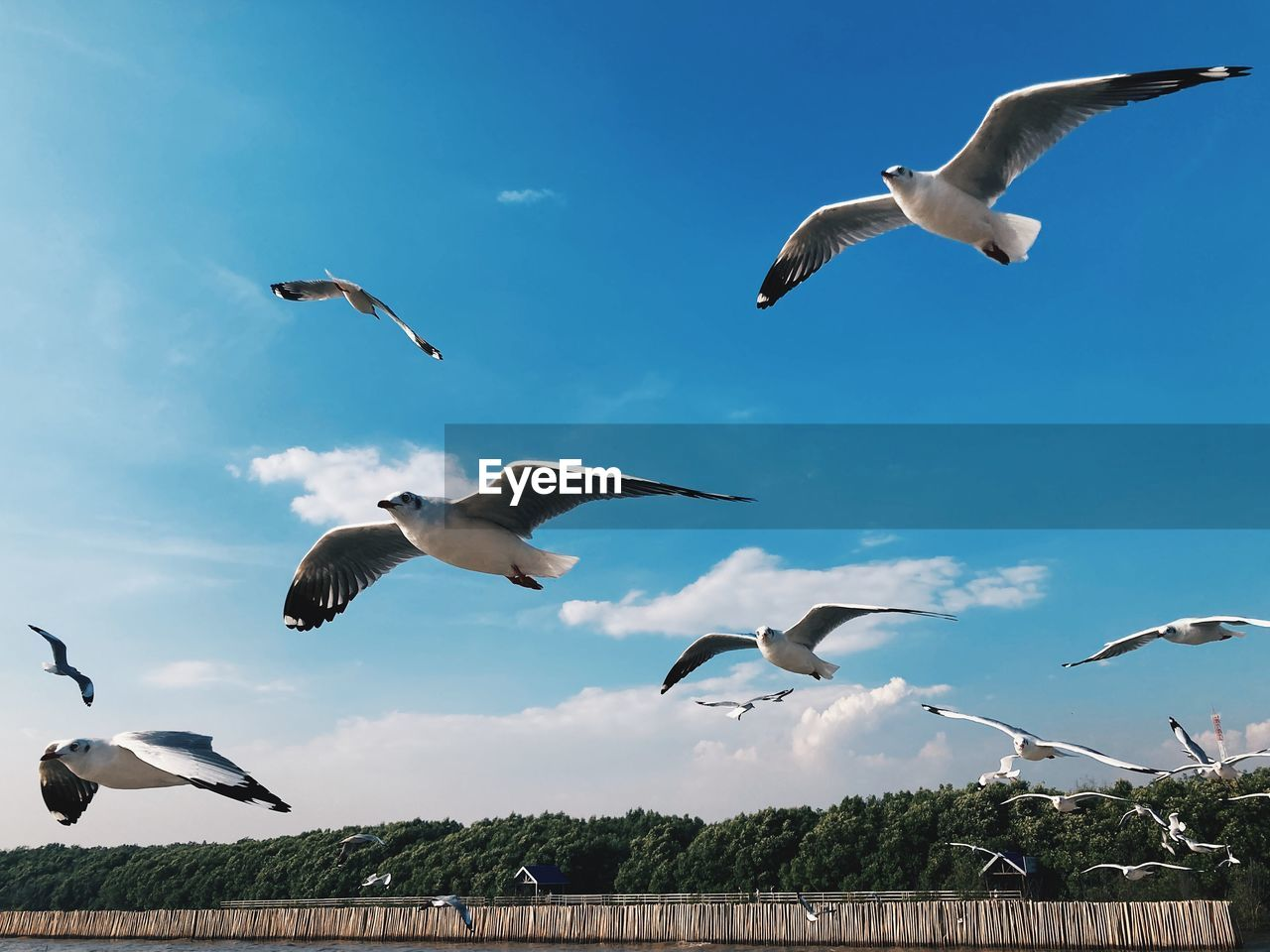 LOW ANGLE VIEW OF BIRDS FLYING
