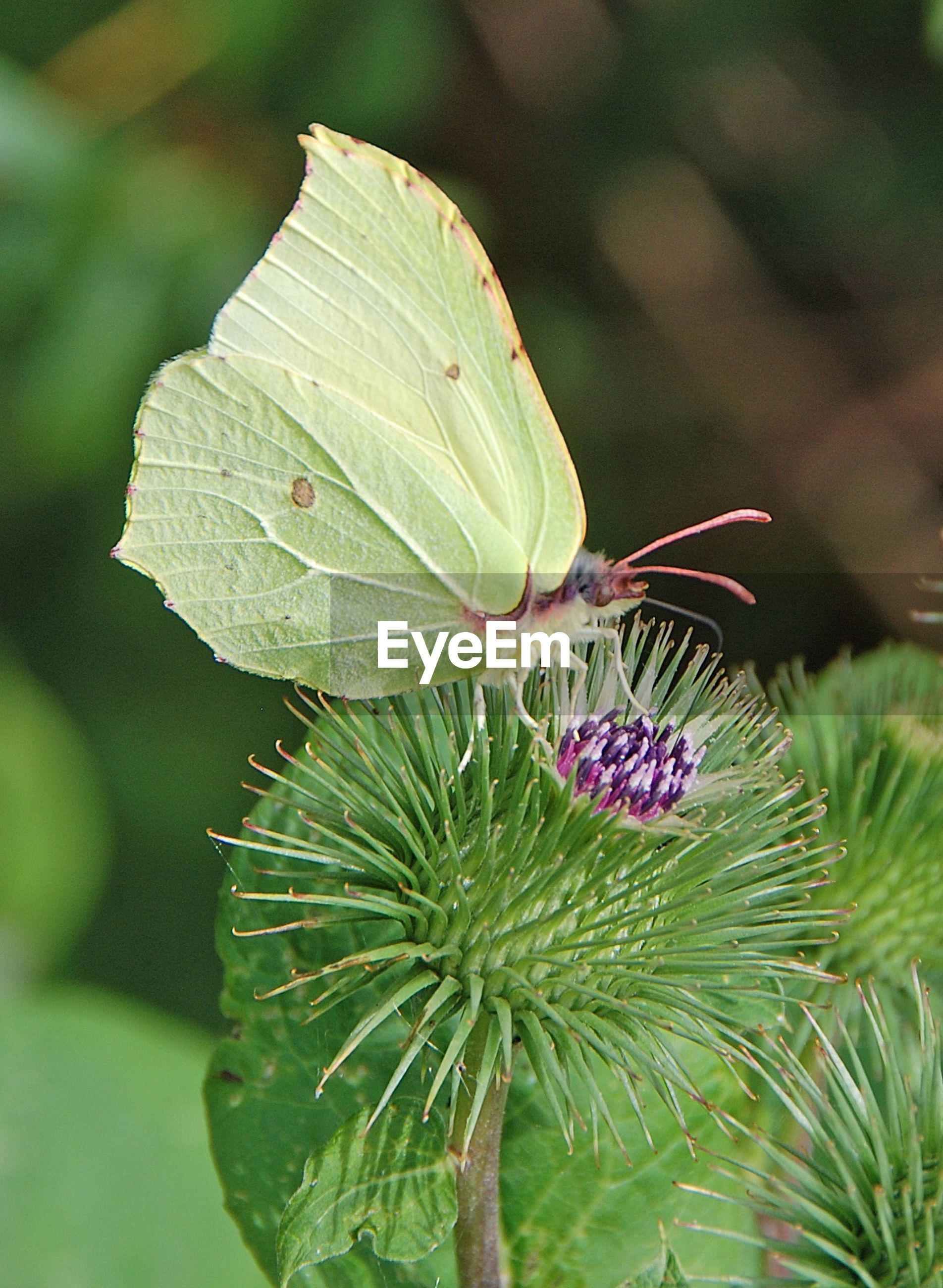 Side View Of Butterfly On Flower