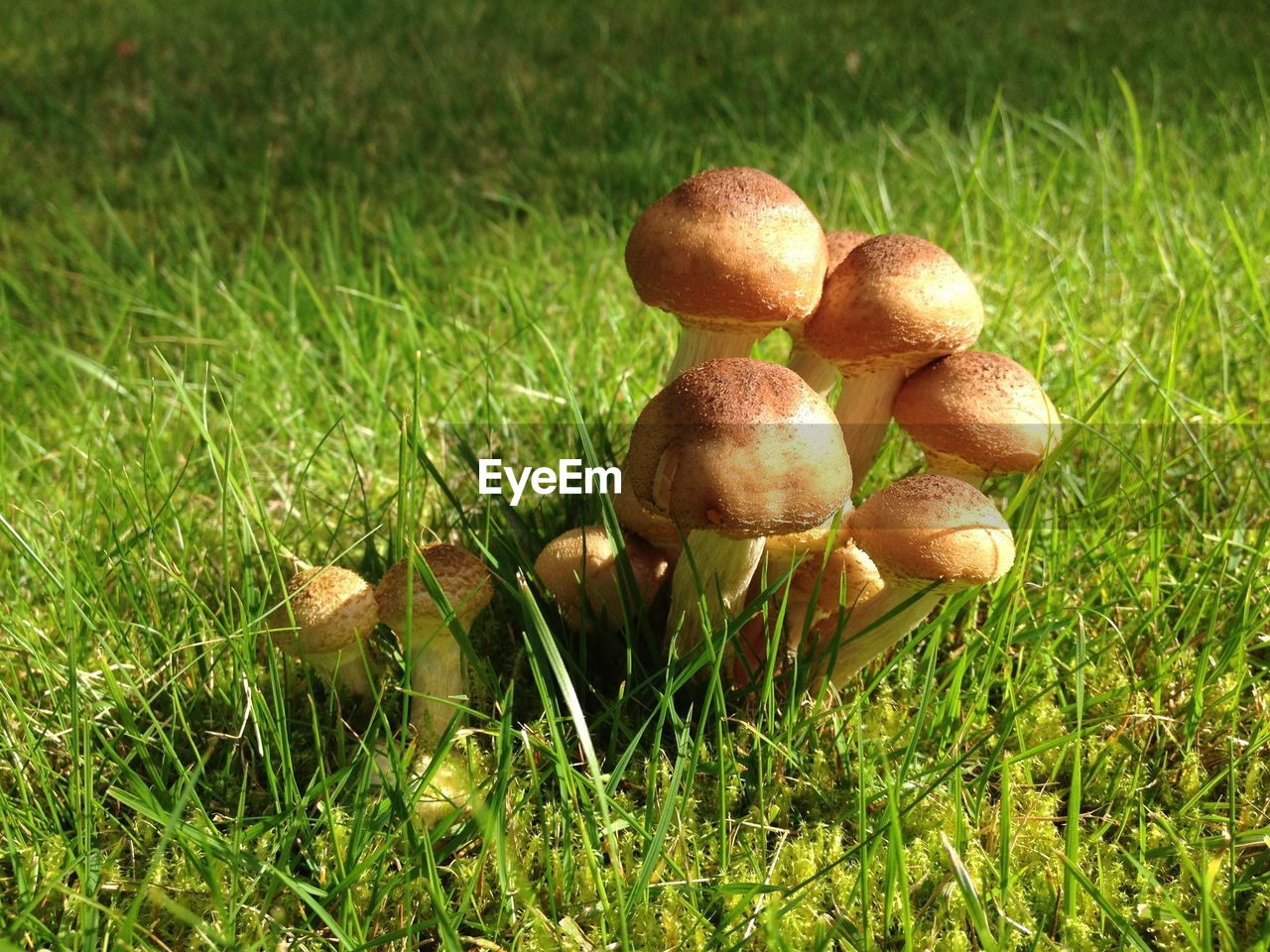 grass, growth, mushroom, nature, field, fungus, toadstool, outdoors, no people, green color, day, freshness, beauty in nature, easter, healthy eating, food, fragility, close-up, fly agaric