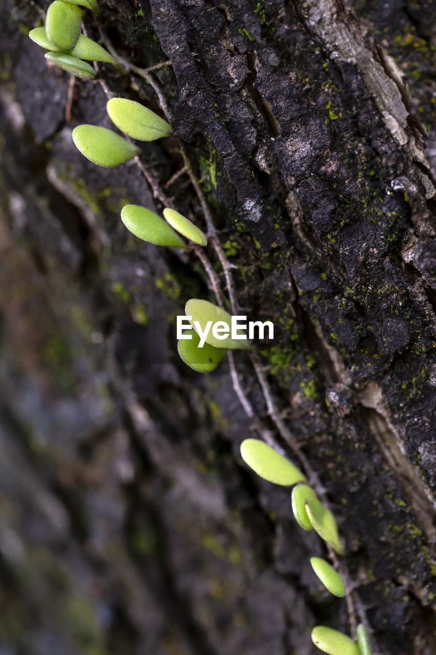 plant, tree trunk, trunk, growth, tree, close-up, selective focus, leaf, plant part, no people, nature, green color, beauty in nature, day, focus on foreground, beginnings, textured, outdoors, botany, branch, bark