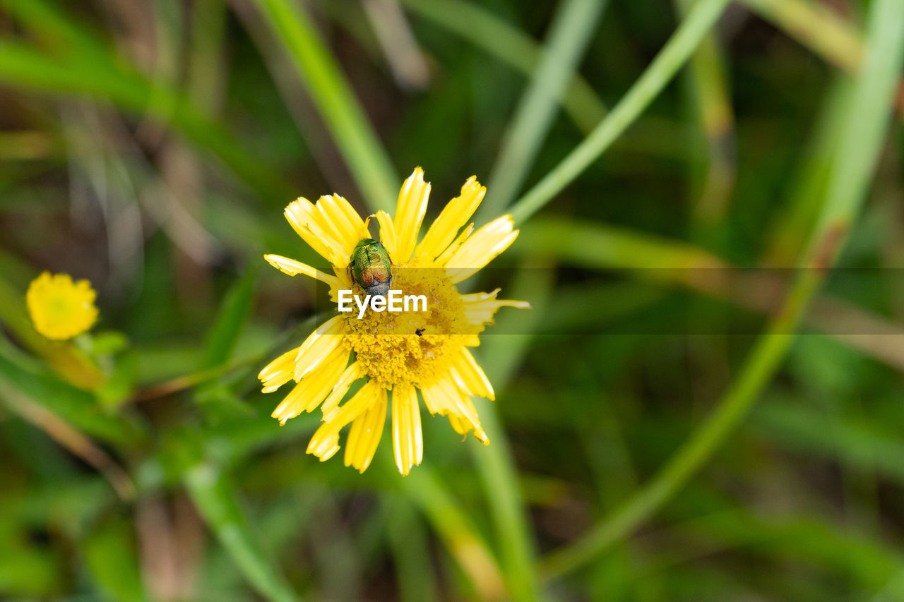 flowering plant, flower, plant, yellow, fragility, animal themes, invertebrate, insect, animal, one animal, animals in the wild, vulnerability, growth, animal wildlife, freshness, beauty in nature, flower head, close-up, petal, inflorescence, no people, pollen, pollination, outdoors