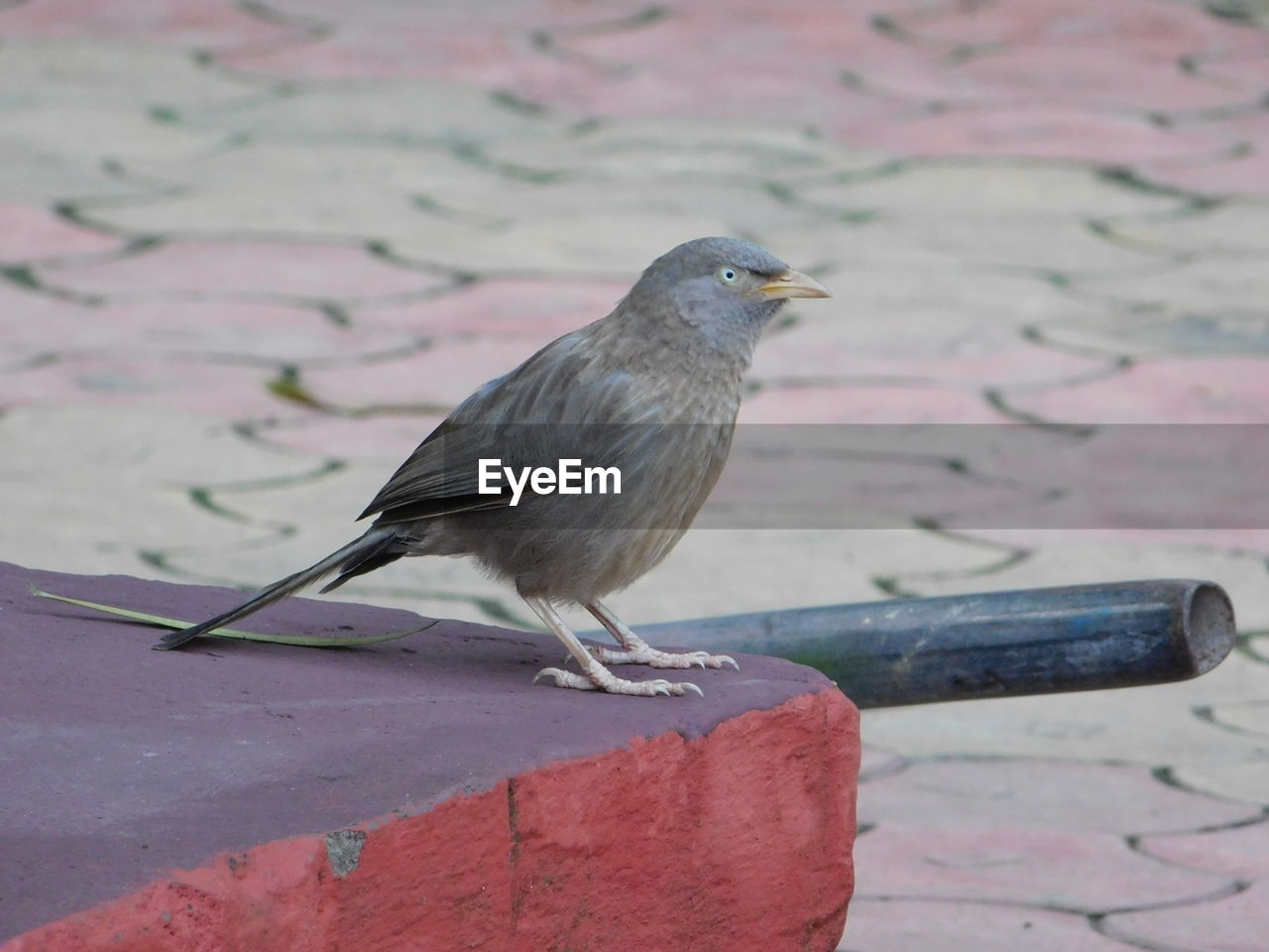 one animal, animals in the wild, bird, animal themes, animal wildlife, day, no people, perching, focus on foreground, outdoors, close-up, retaining wall, nature