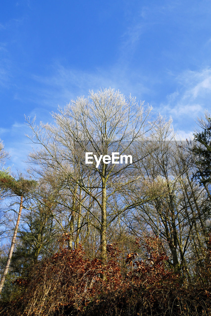 nature, tree, tranquility, sky, beauty in nature, outdoors, forest, growth, no people, scenics, landscape, autumn, day