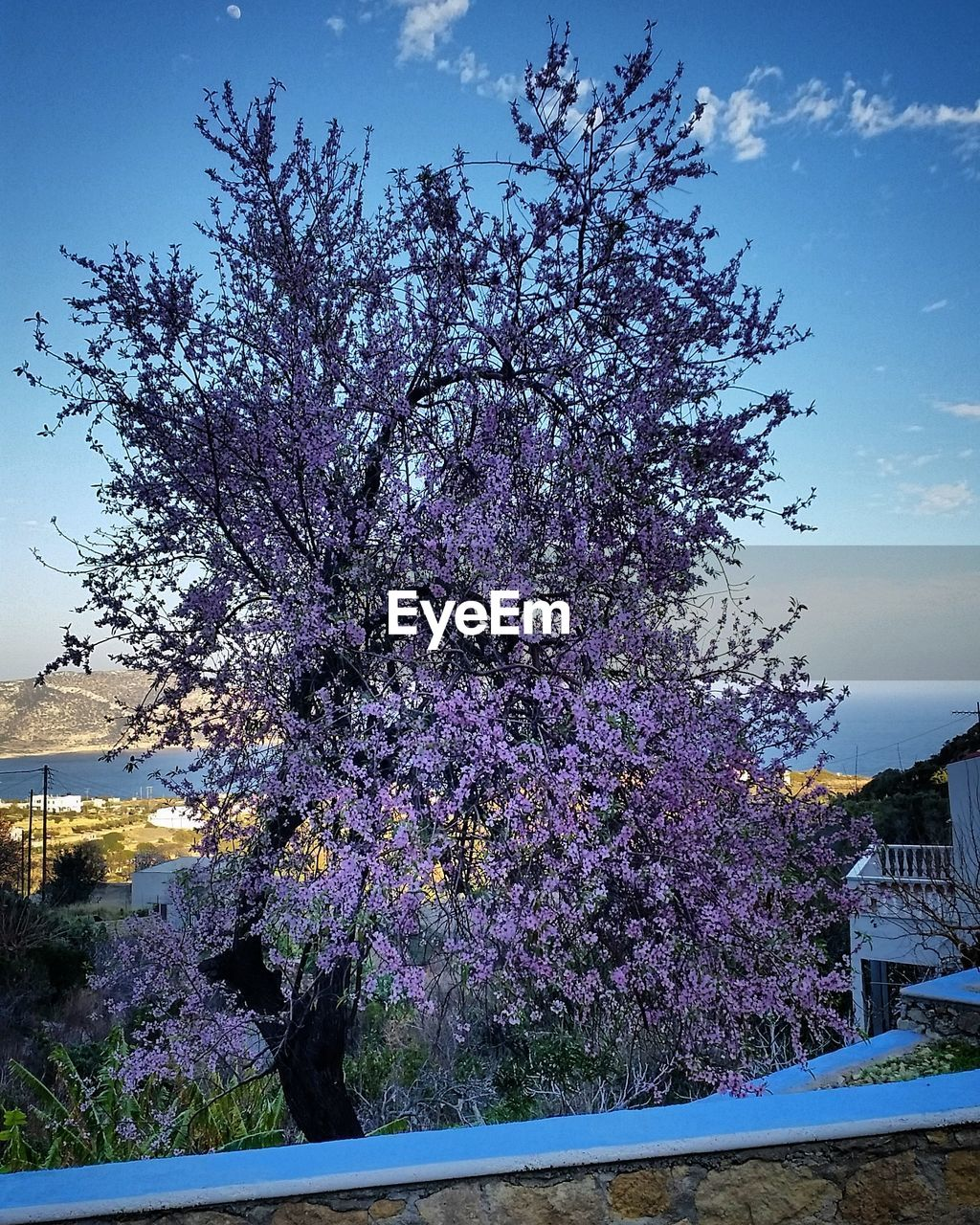 tree, flower, blossom, growth, nature, no people, beauty in nature, springtime, fragility, purple, day, freshness, sky, outdoors, tranquility, branch