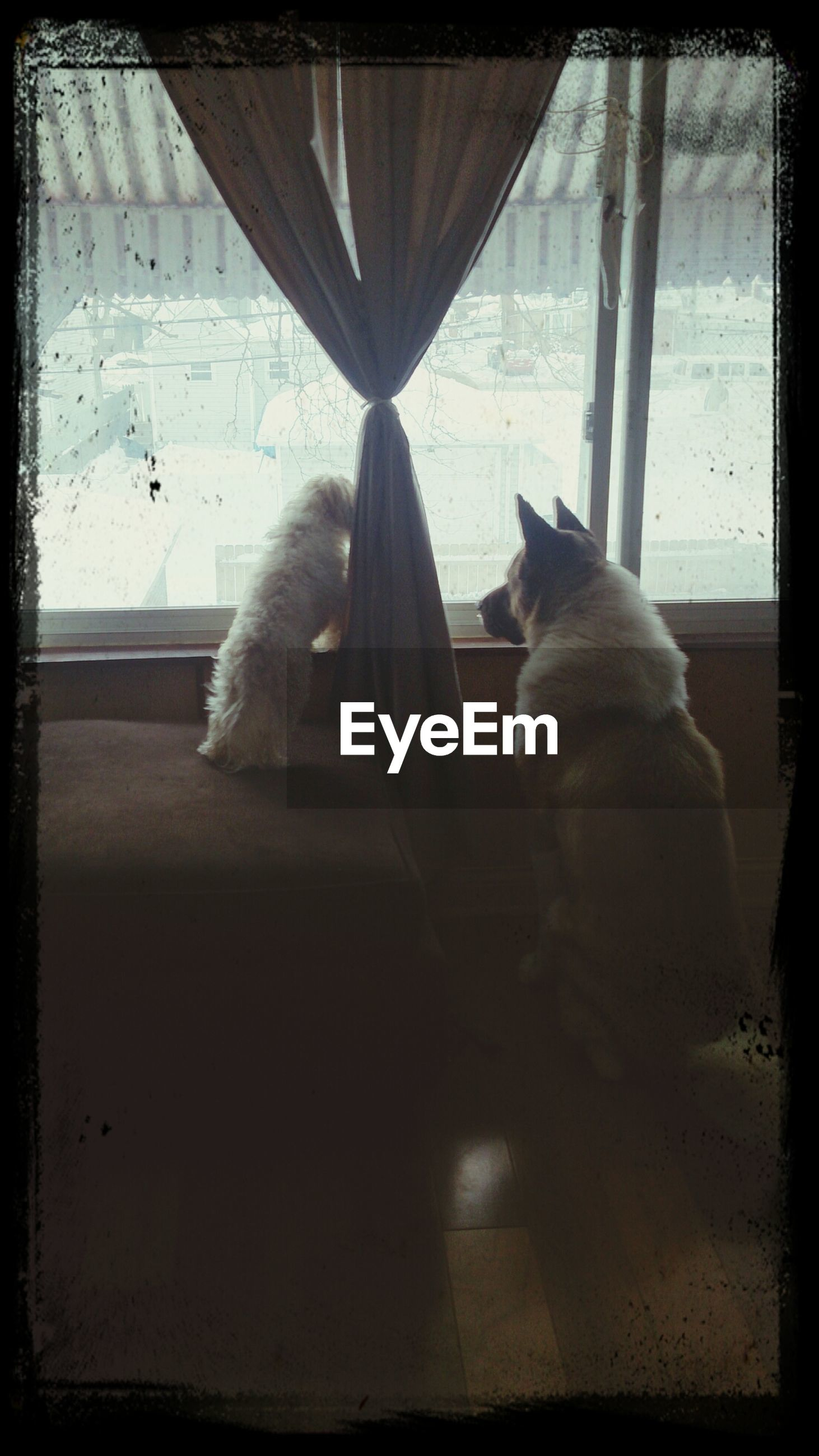 animal themes, indoors, one animal, transfer print, pets, domestic animals, window, mammal, auto post production filter, sitting, relaxation, glass - material, domestic cat, transparent, looking through window, cat, home interior, wildlife, resting, rear view