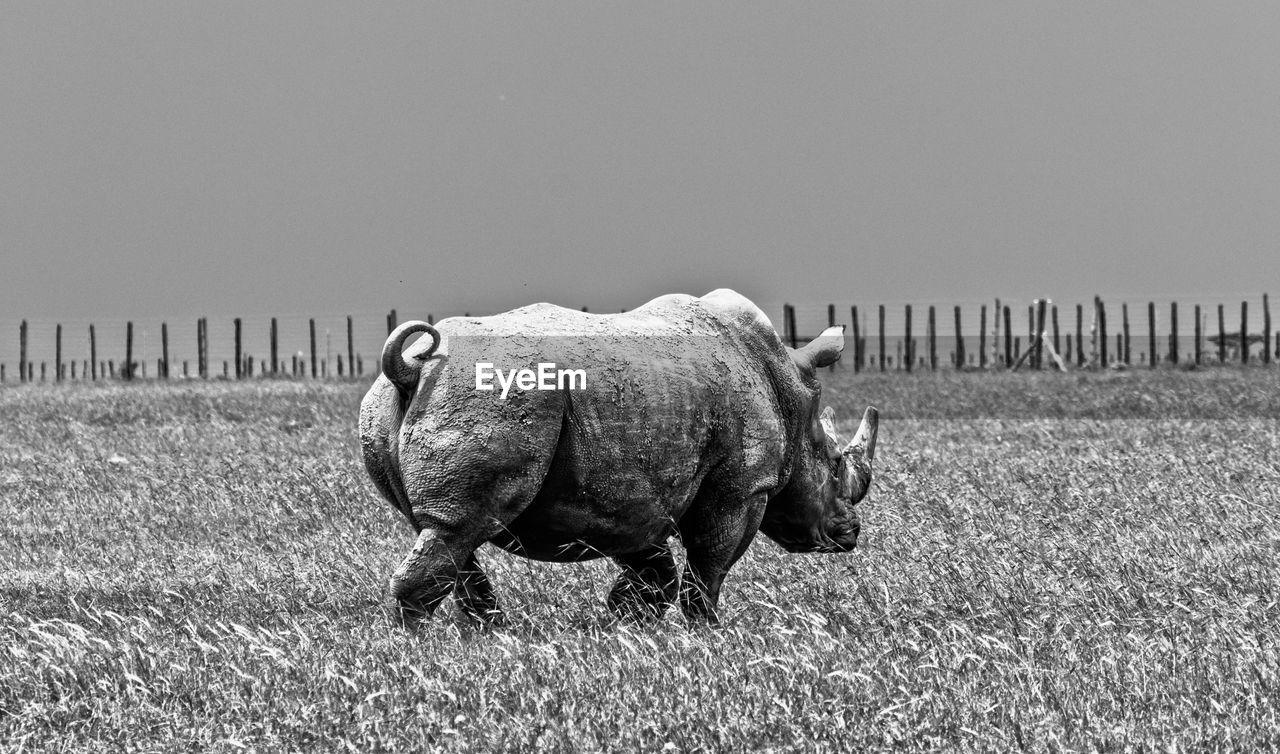 A grunge effect shot of a rhino