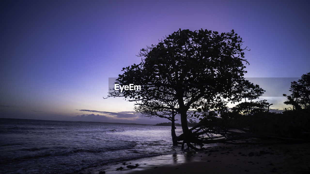 SILHOUETTE TREE ON SHORE AGAINST CLEAR SKY