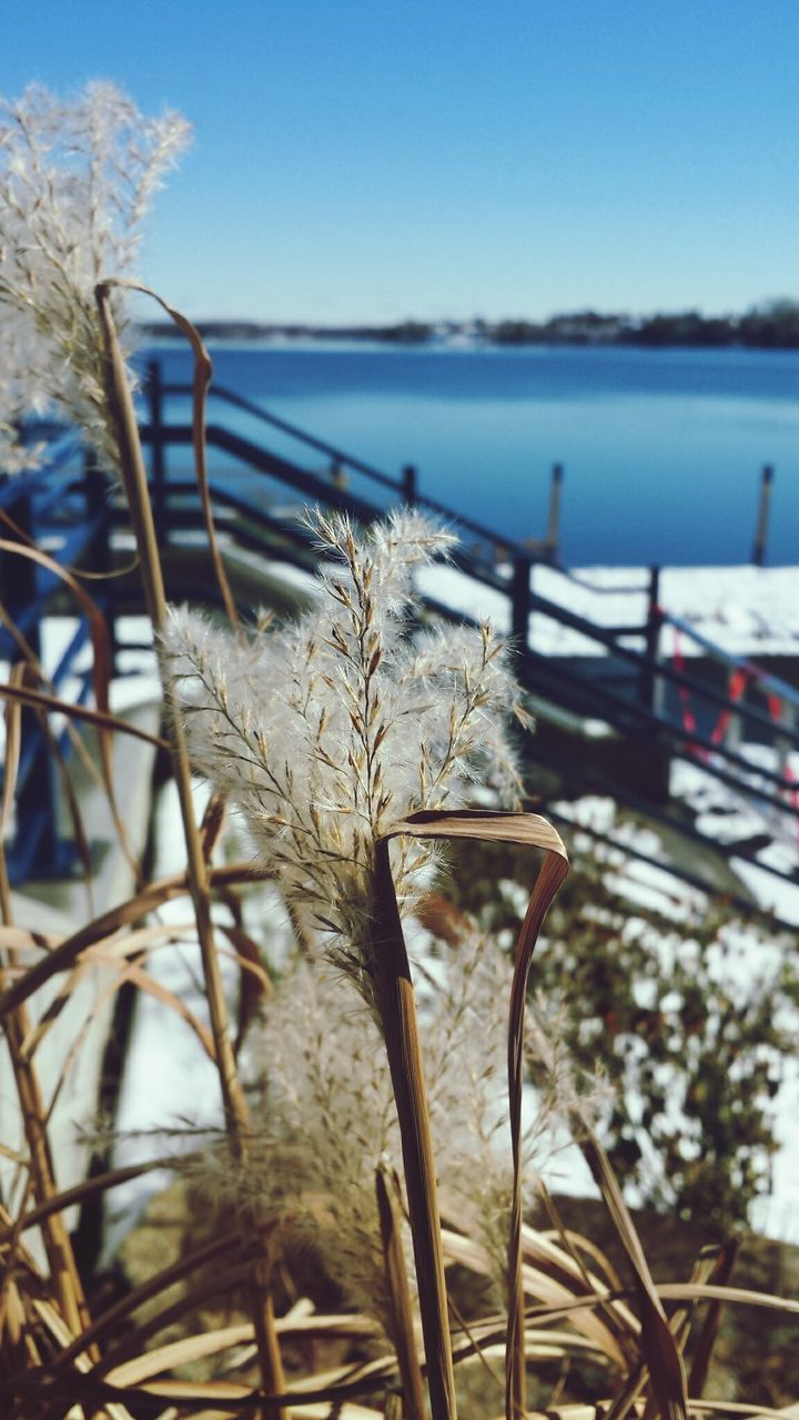 focus on foreground, sky, plant, water, nature, day, tranquility, growth, beauty in nature, no people, close-up, sea, land, tranquil scene, scenics - nature, beach, sunlight, clear sky, outdoors, timothy grass