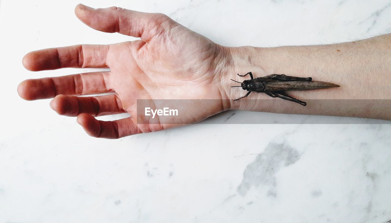 human hand, hand, human body part, invertebrate, one animal, animal wildlife, animals in the wild, one person, body part, insect, real people, close-up, indoors, white color, high angle view, vertebrate, wall - building feature, finger, animal leg, human limb