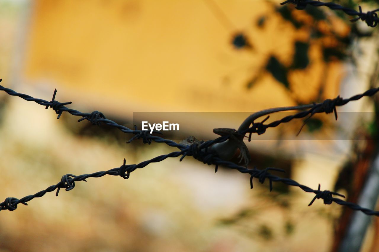 protection, safety, fence, security, boundary, barrier, barbed wire, metal, wire, sharp, focus on foreground, close-up, no people, selective focus, nature, outdoors, day, spiked, forbidden, land