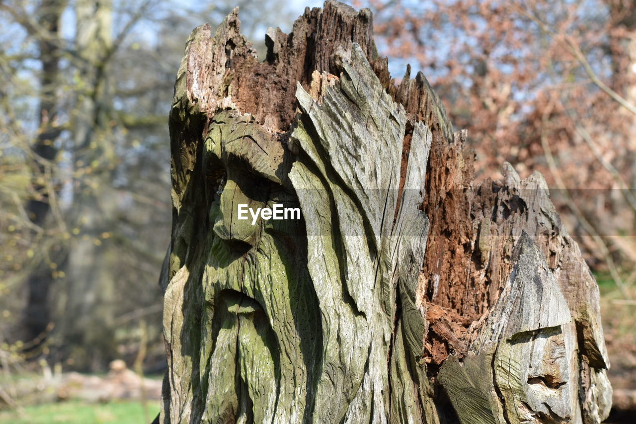 focus on foreground, tree, day, no people, tree trunk, close-up, outdoors, nature