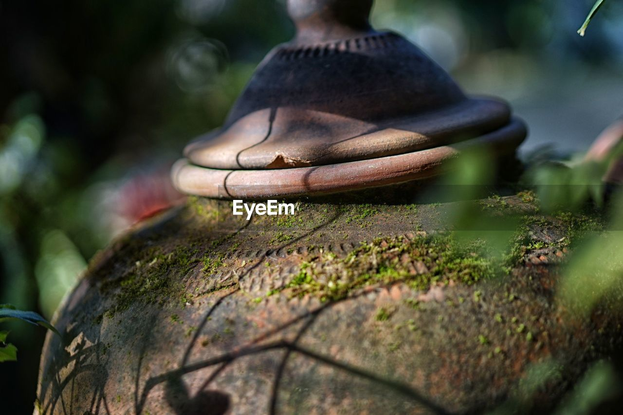 Close-Up Of Mossy Earthen Pot