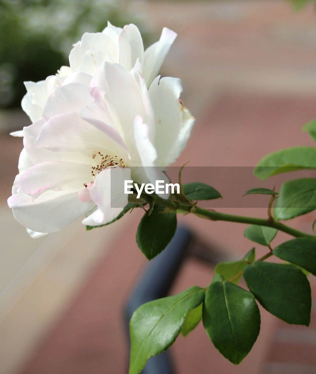 flower, growth, nature, beauty in nature, petal, fragility, no people, freshness, plant, close-up, outdoors, day, tree, flower head