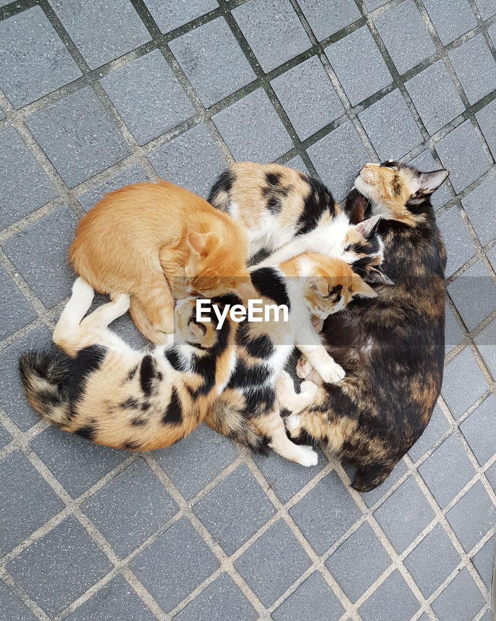 animal themes, mammal, animal, group of animals, domestic, pets, domestic animals, vertebrate, high angle view, young animal, relaxation, canine, no people, dog, feline, puppy, cat, cute, tiled floor, animal family