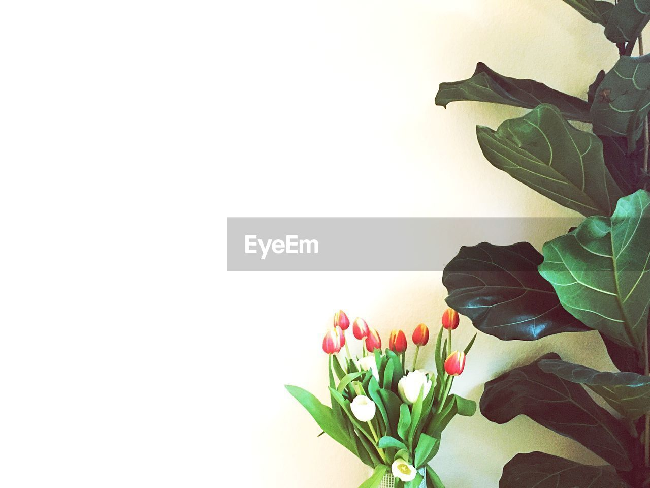 flower, flowering plant, plant part, leaf, plant, vulnerability, fragility, beauty in nature, petal, nature, close-up, freshness, flower head, indoors, studio shot, copy space, white background, inflorescence, growth, no people, tulip, flower arrangement, bunch of flowers