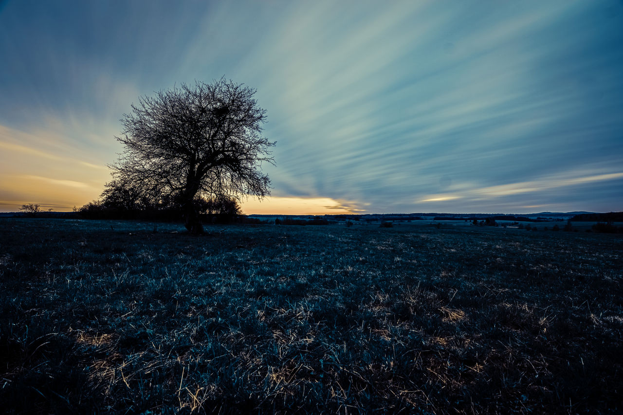 sky, tranquil scene, tranquility, cloud - sky, beauty in nature, land, scenics - nature, tree, environment, plant, field, sunset, landscape, nature, no people, non-urban scene, horizon, silhouette, outdoors, dusk