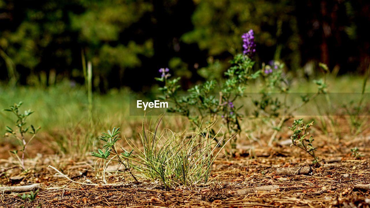 Plants on field
