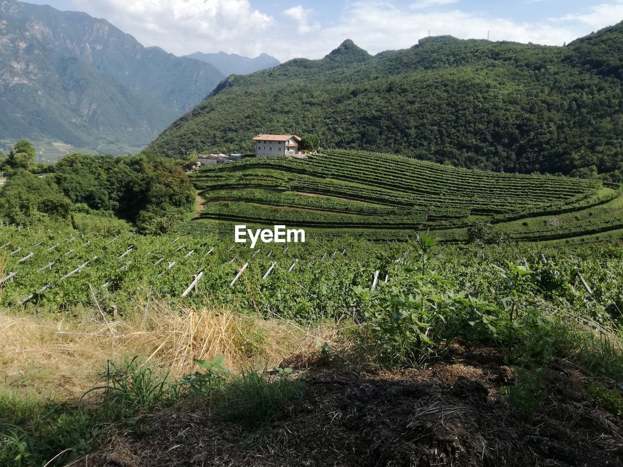 landscape, mountain, scenics - nature, growth, plant, environment, agriculture, beauty in nature, field, land, green color, tranquil scene, tranquility, rural scene, crop, no people, nature, farm, mountain range, tree, outdoors, tea crop, plantation