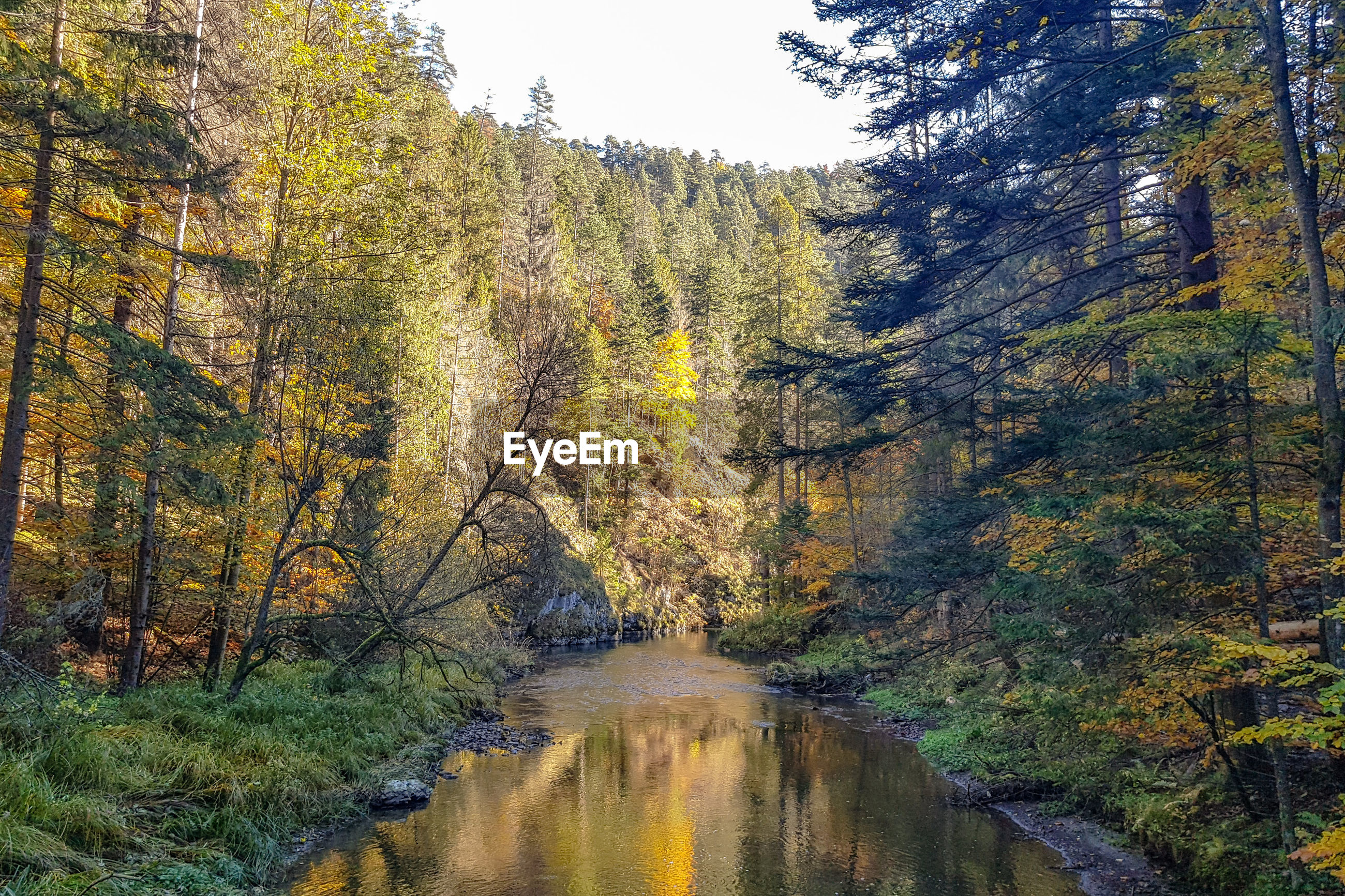 Plants growing by river stream in forest during autumn