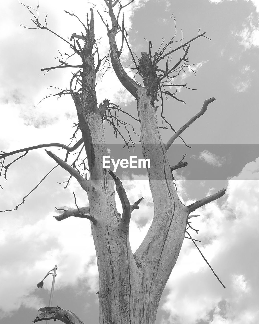 tree, branch, low angle view, sky, bare tree, tree trunk, outdoors, day, cloud - sky, nature, no people, lone, dead tree, beauty in nature, animal themes