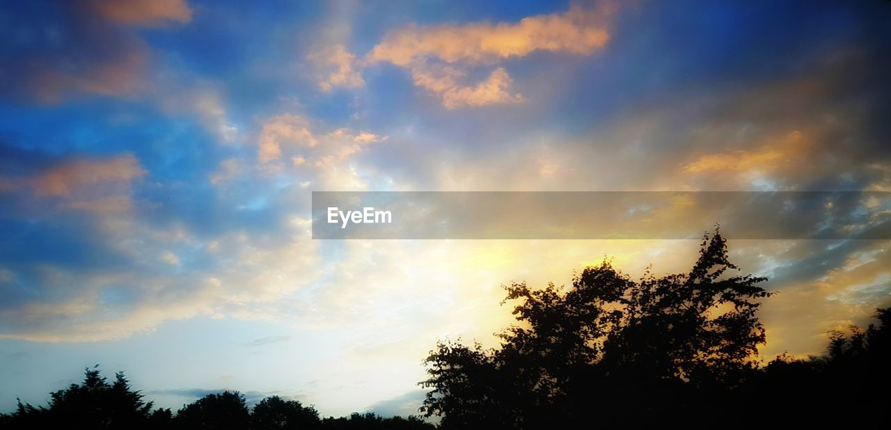 tree, sky, beauty in nature, cloud - sky, nature, scenics, tranquil scene, tranquility, low angle view, no people, silhouette, outdoors, growth, sunset, day