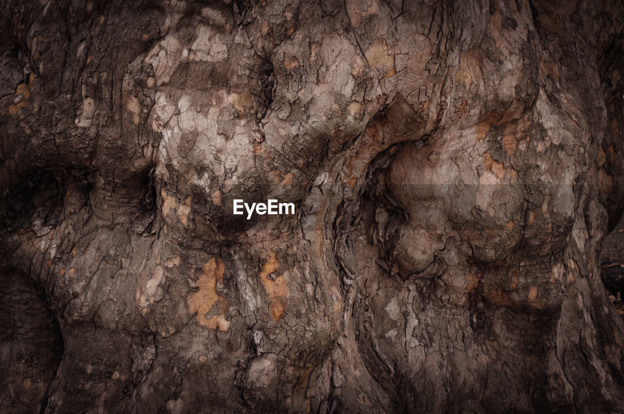 nature, textured, rock - object, rough, ancient, no people, backgrounds, close-up, tree, day, outdoors