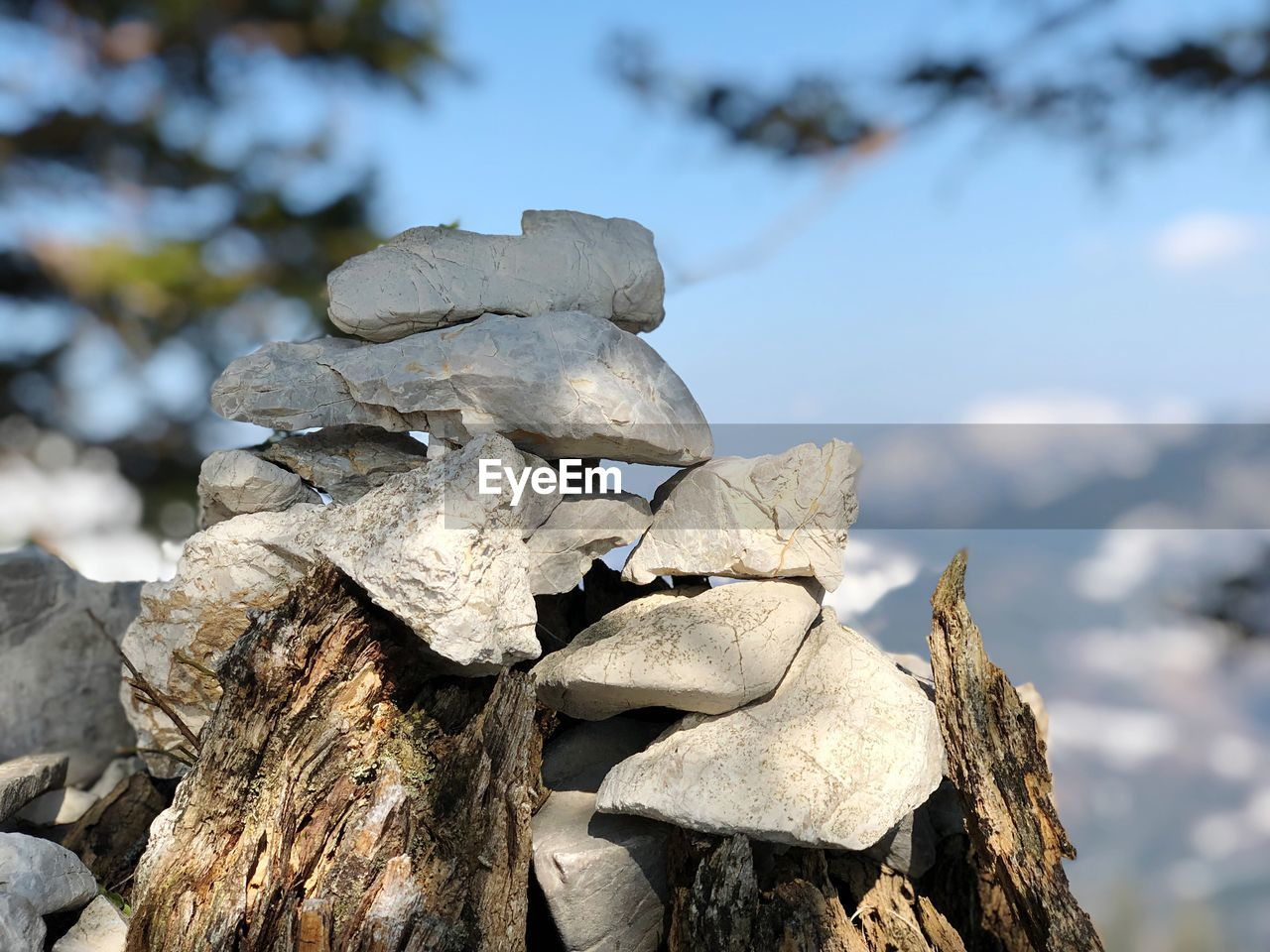 focus on foreground, tree, nature, no people, day, solid, rock, close-up, beauty in nature, tranquility, trunk, tree trunk, plant, textured, rock - object, stack, outdoors, sky, wood - material, sunlight, dead plant