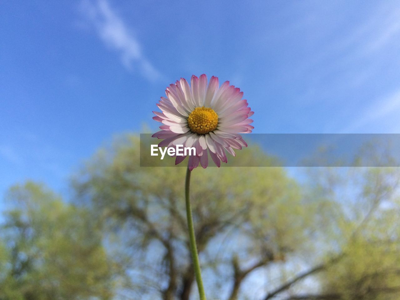 Low Angle View Of Daisy Against Sky