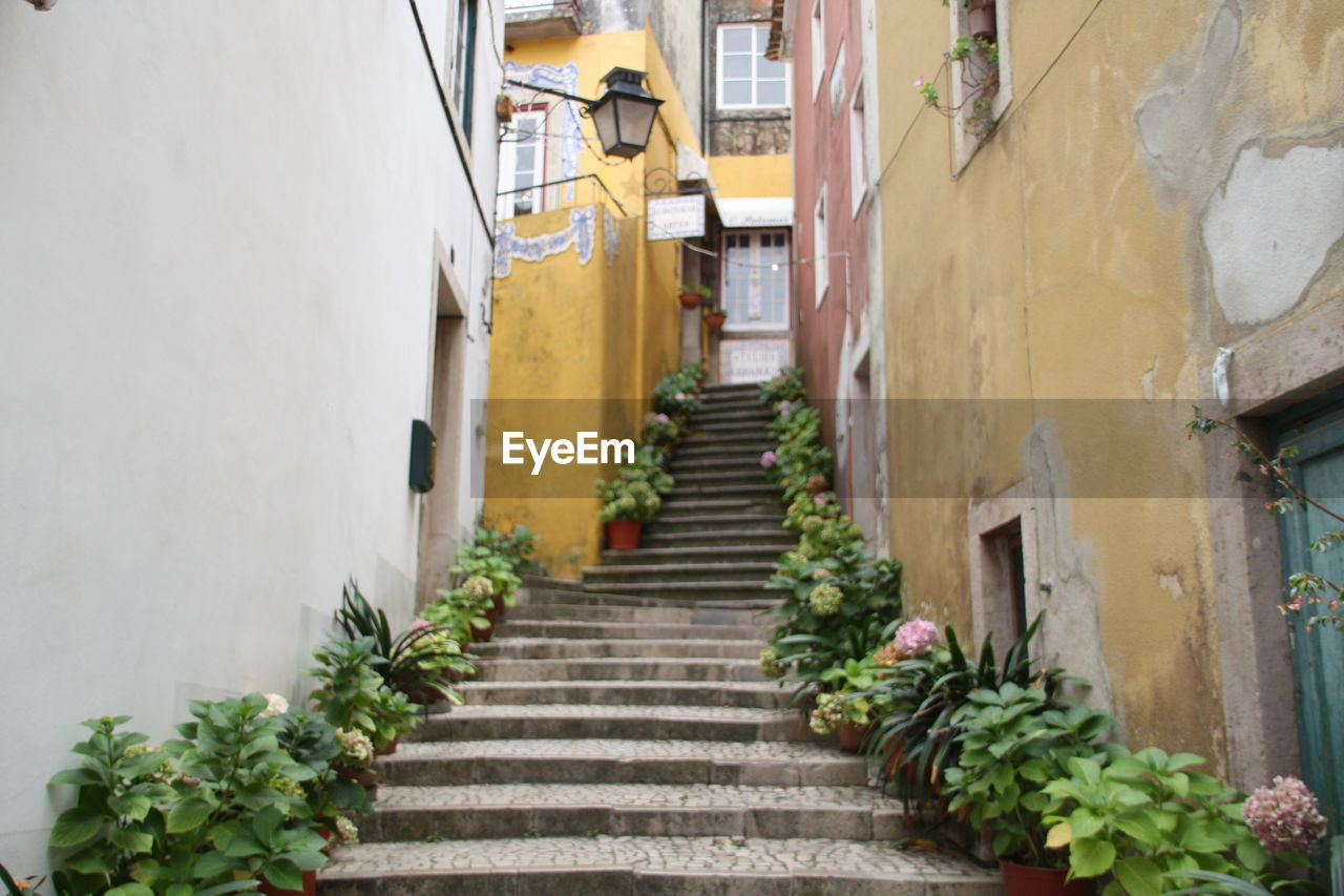 steps, architecture, staircase, built structure, steps and staircases, building exterior, the way forward, stairs, day, outdoors, no people