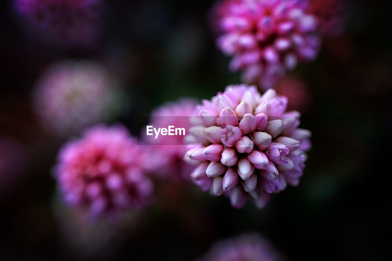 flower, nature, beauty in nature, purple, fragility, freshness, petal, growth, focus on foreground, no people, blooming, flower head, plant, close-up, day, outdoors