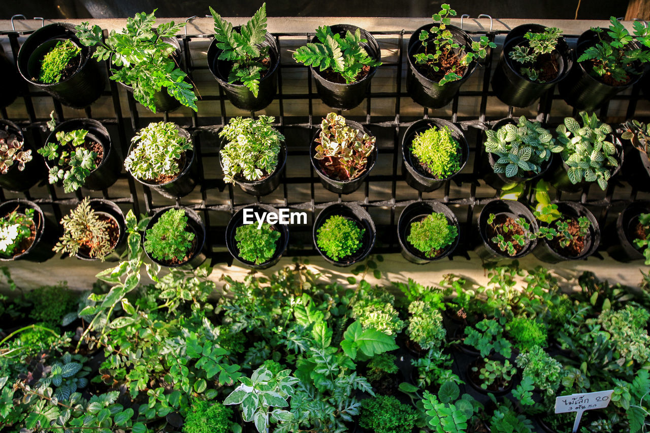 green color, growth, plant, plant part, leaf, botany, in a row, freshness, no people, plant nursery, nature, food and drink, day, potted plant, food, side by side, healthy eating, beauty in nature, wellbeing, vegetable, outdoors, order, herb