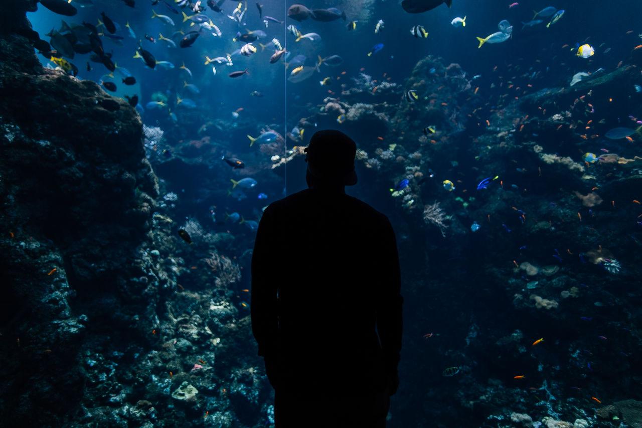 Man Looking At Fishes In Aquarium
