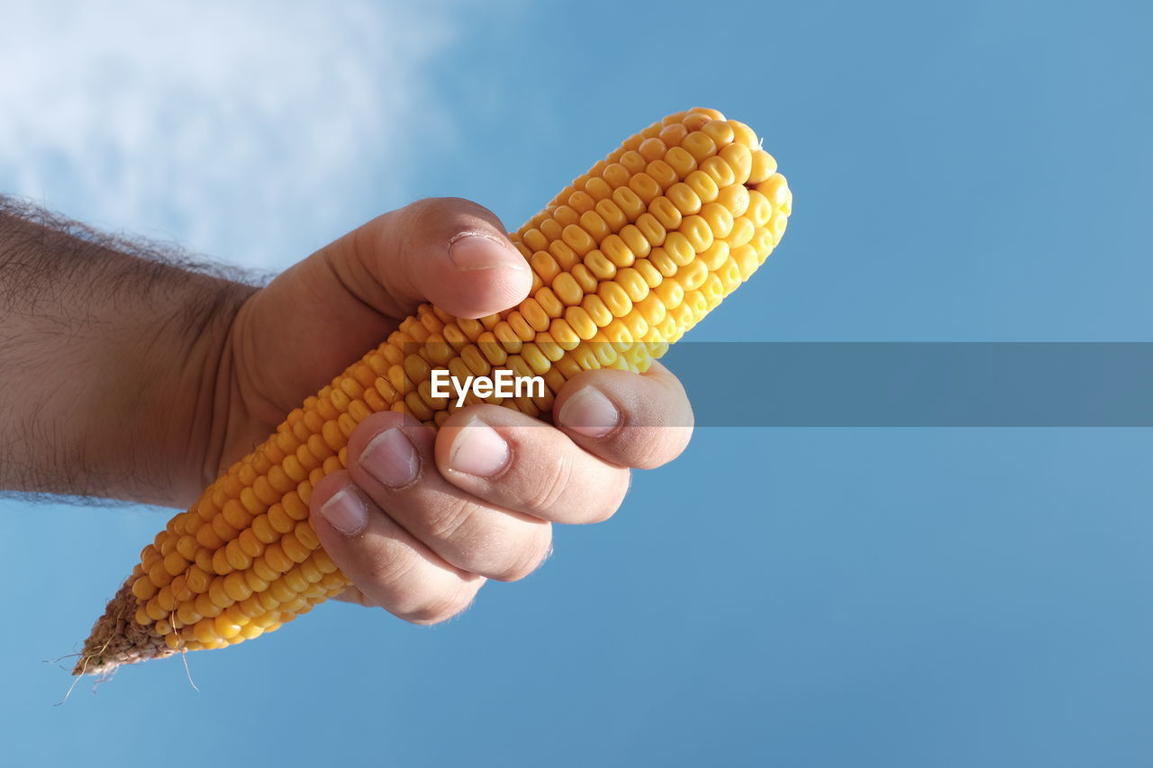 Cropped Image Of Man Holding Corn Against Blue Sky