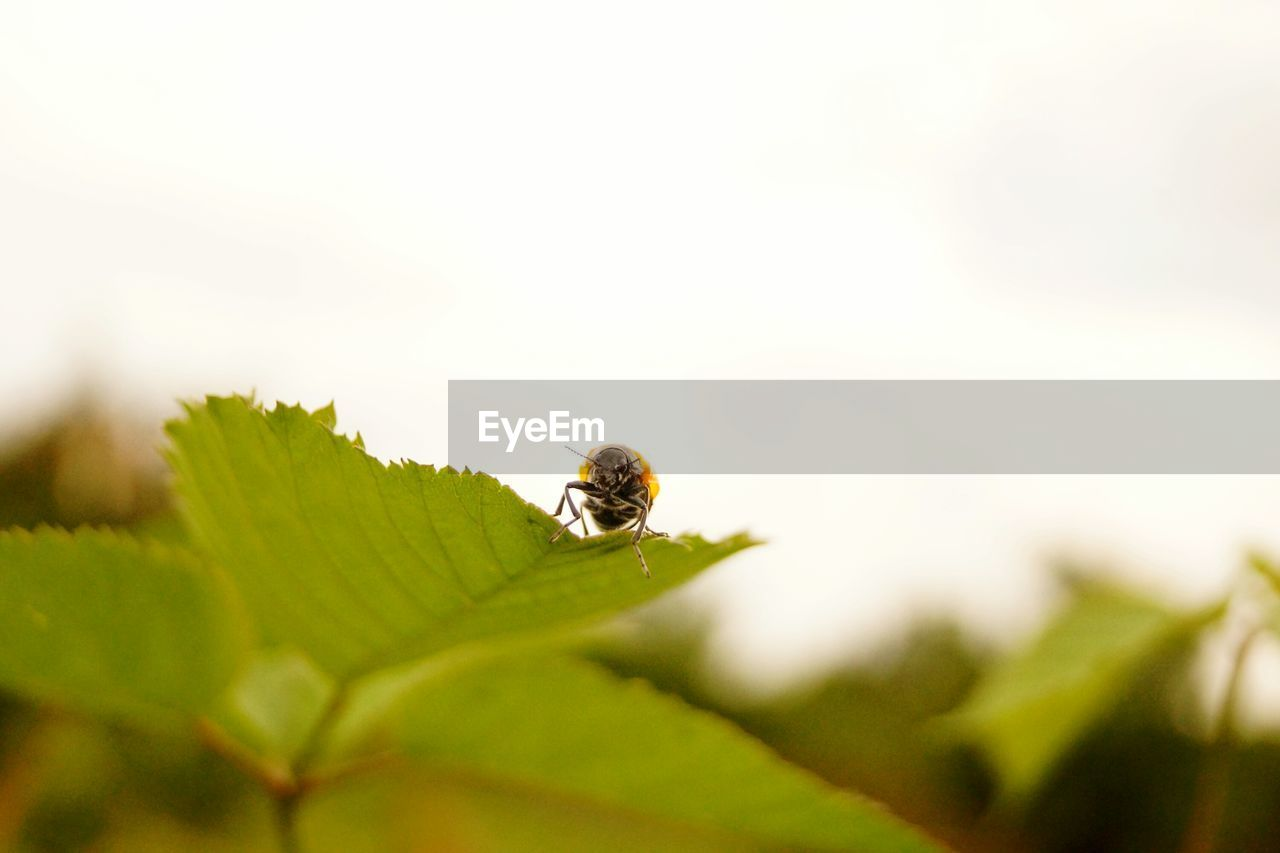 invertebrate, animals in the wild, insect, plant part, leaf, animal themes, animal wildlife, animal, selective focus, one animal, close-up, no people, green color, nature, plant, growth, beauty in nature, day, outdoors, zoology