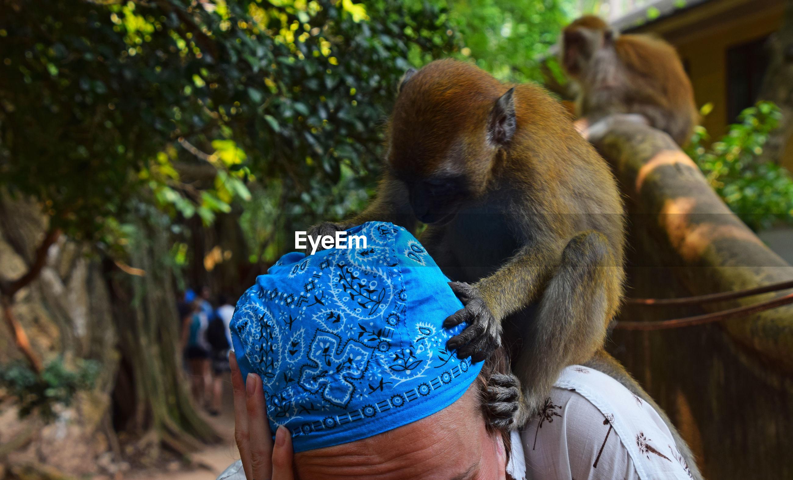 Close-up of monkey on woman wearing bandana