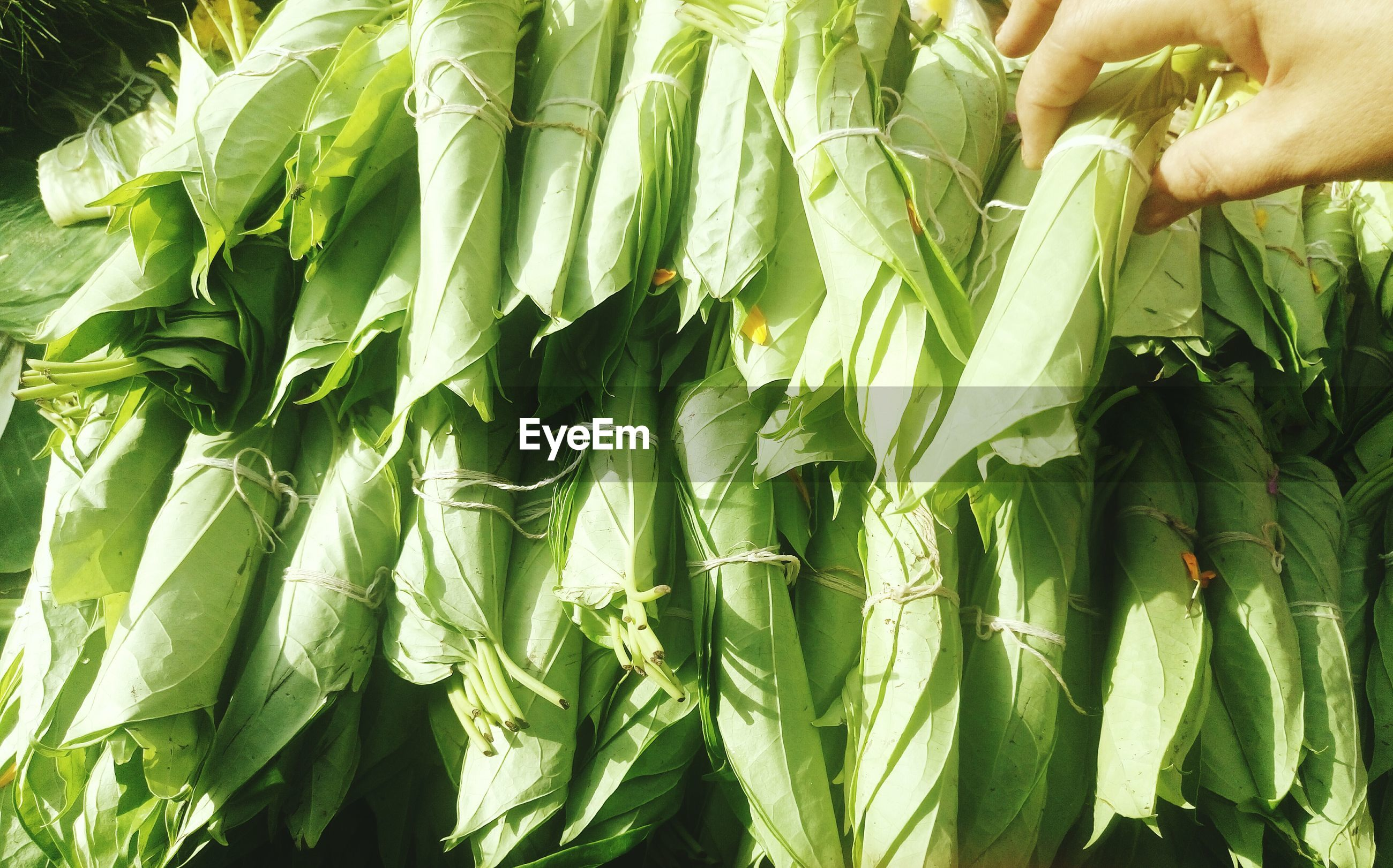 Cropped hand of person holding betel leaves for sale at market