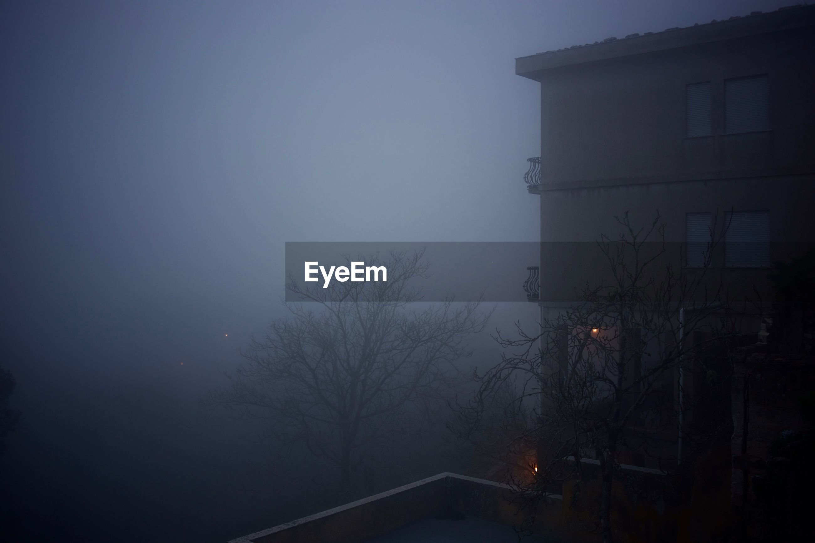 Bare trees with building during foggy weather