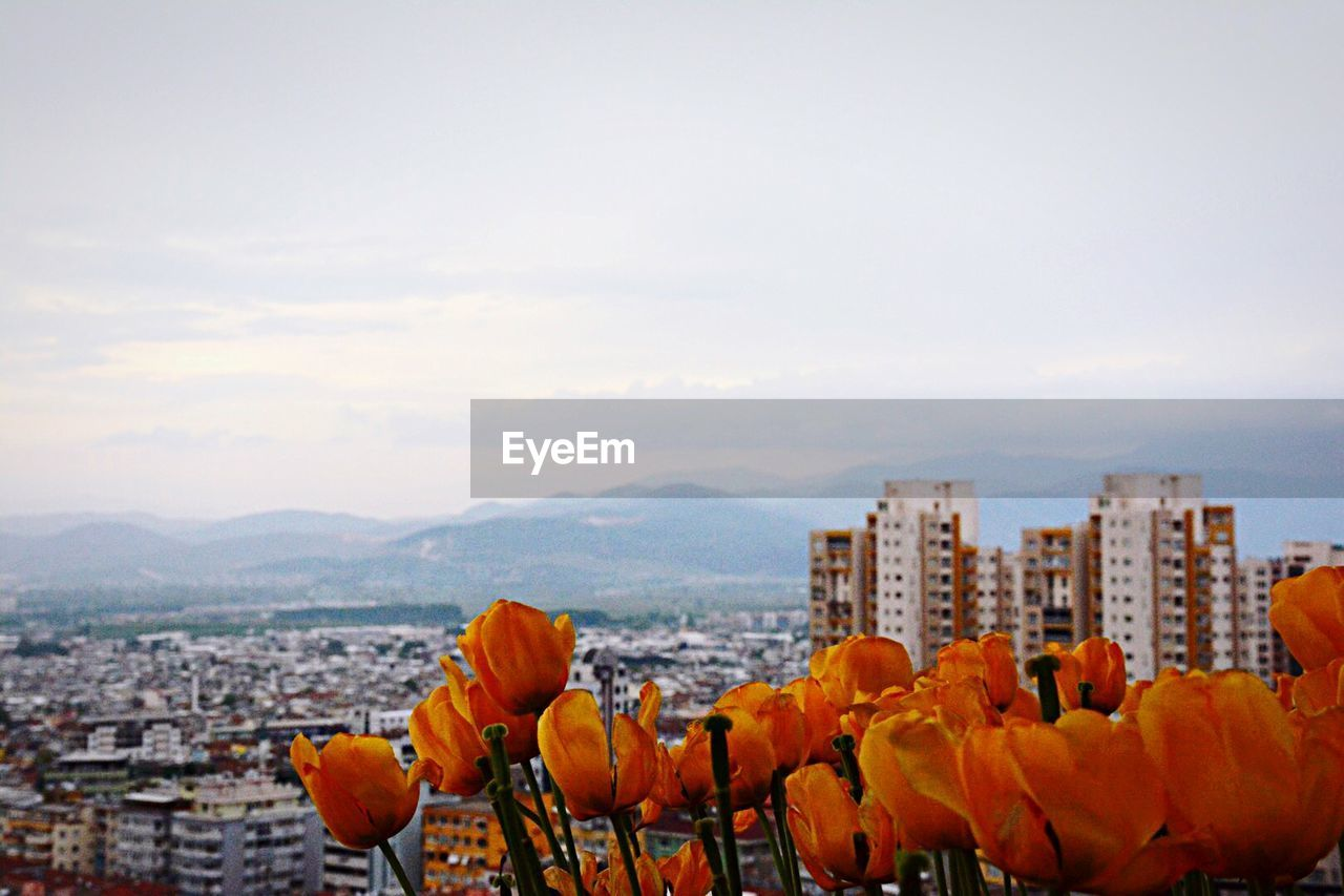 High angle shot of cityscape with flowers in foreground