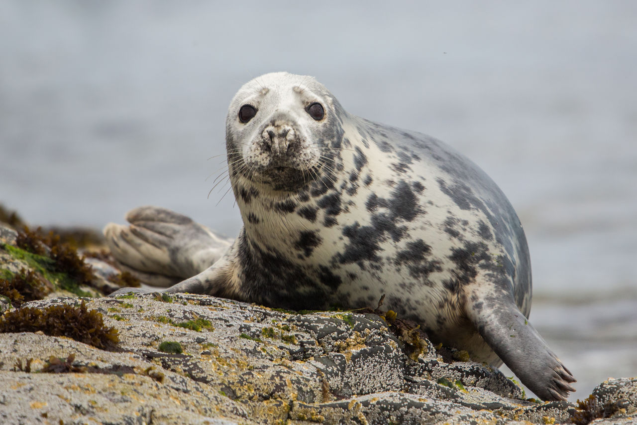 animal wildlife, one animal, solid, animals in the wild, animal, animal themes, rock, rock - object, sea, mammal, water, underwater, no people, nature, day, focus on foreground, looking away, outdoors, seal - animal, marine, whisker