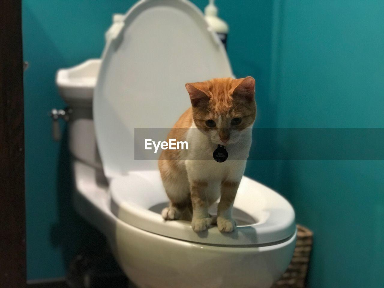 Cat sitting on toilet bowl in bathroom