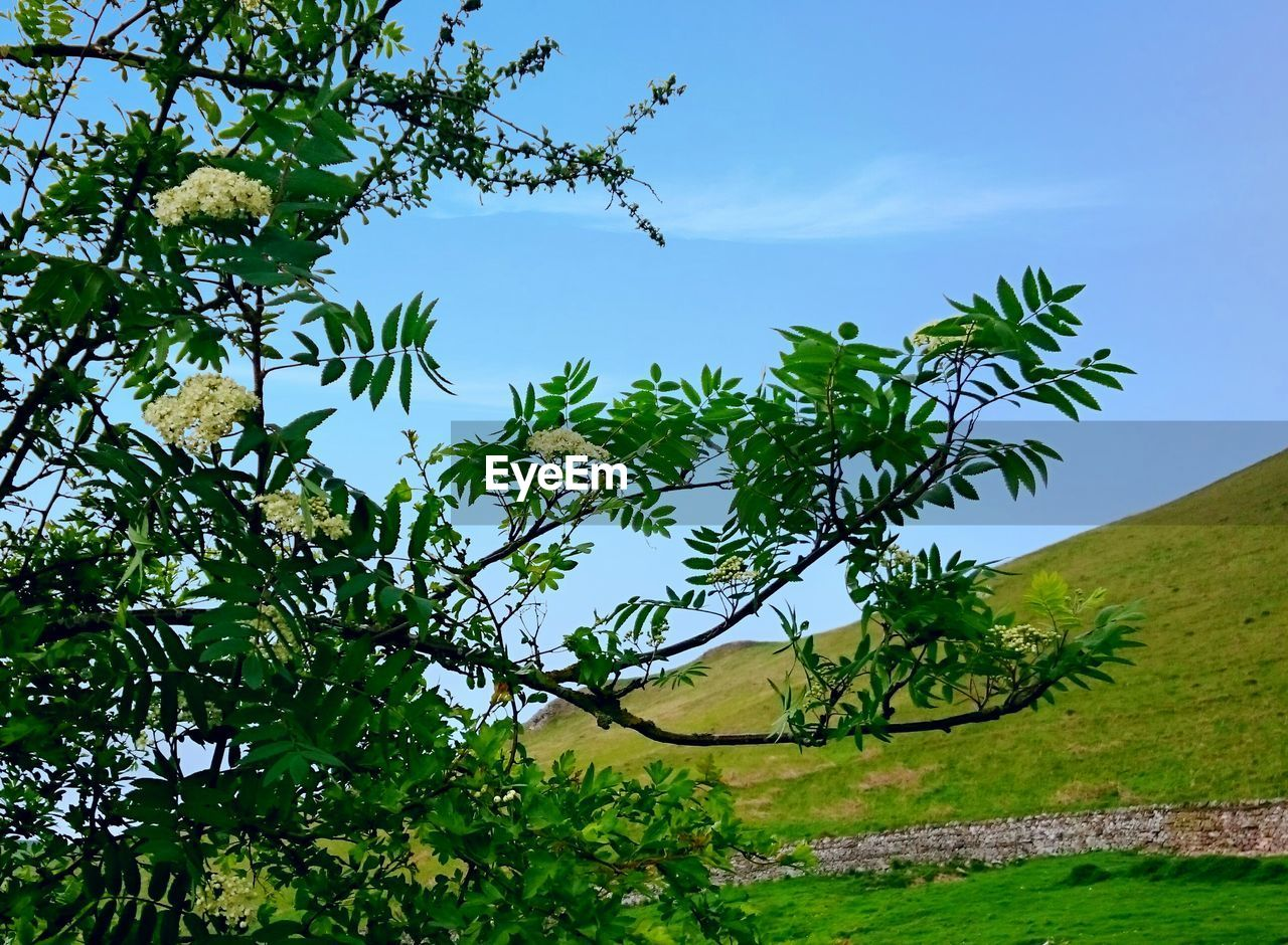 tree, growth, nature, day, green color, no people, outdoors, beauty in nature, tranquil scene, plant, low angle view, sky, tranquility, scenics, leaf, branch