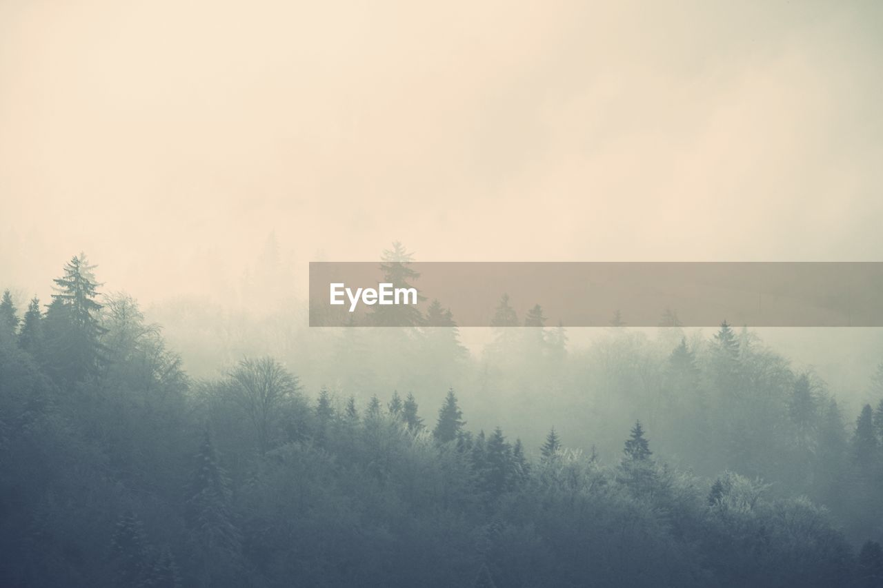 tree, plant, fog, tranquility, tranquil scene, beauty in nature, nature, scenics - nature, sky, no people, day, forest, non-urban scene, land, growth, landscape, winter, outdoors, environment, coniferous tree, hazy