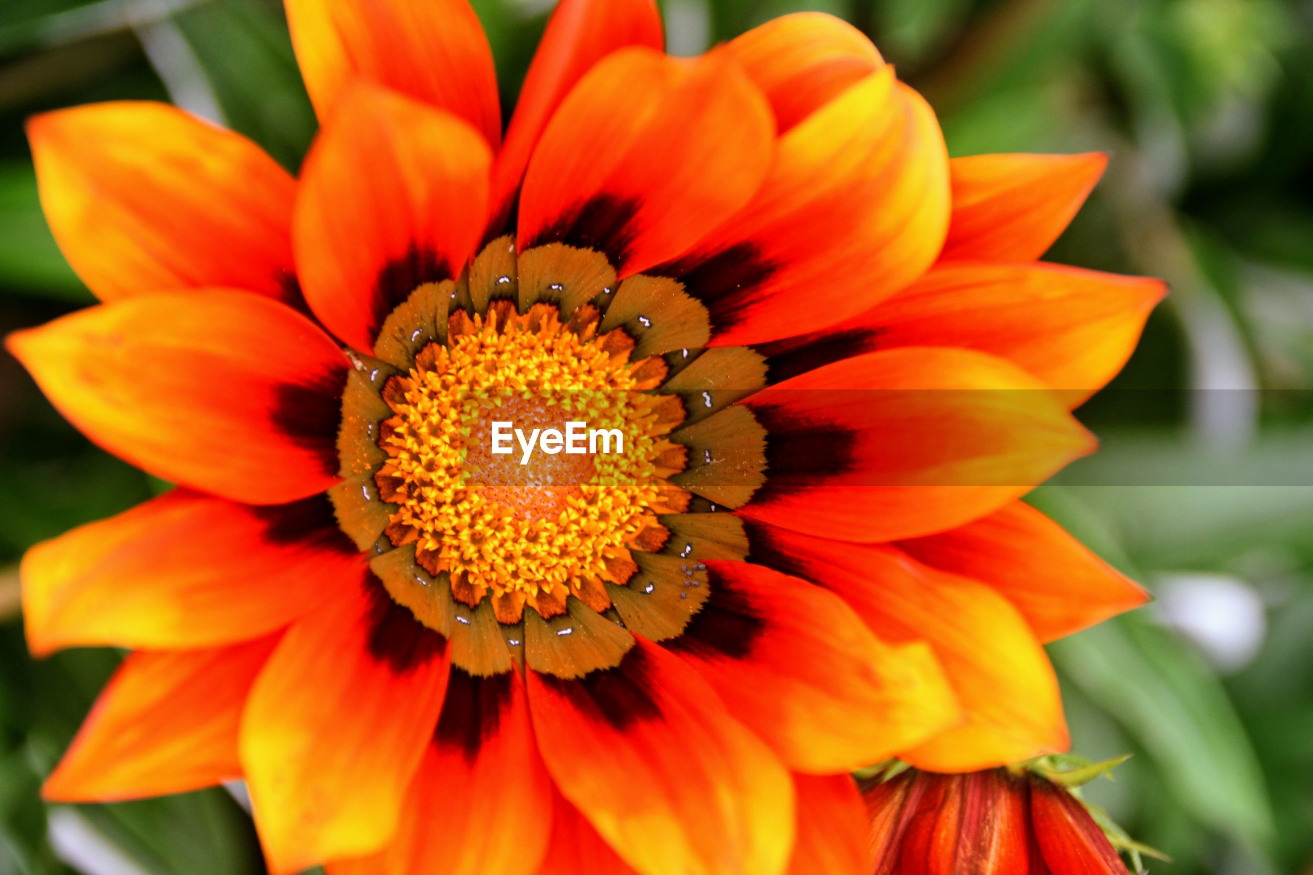 CLOSE-UP OF RED AND ORANGE FLOWER