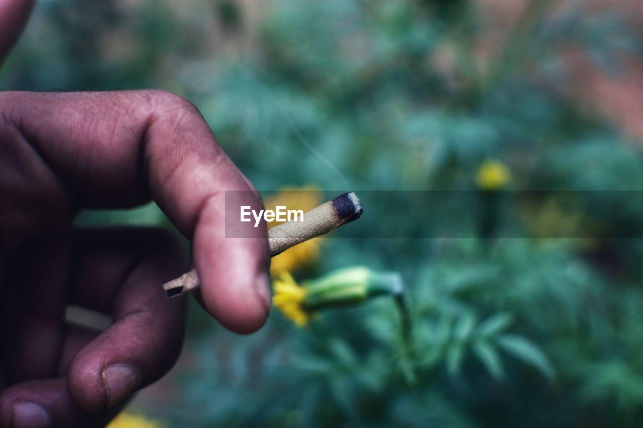 Close-Up Of Hand Holding Marijuana