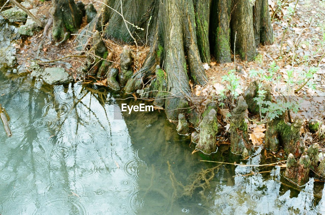 plant, nature, tree, water, no people, day, beauty in nature, growth, tranquility, forest, reflection, land, outdoors, waterfront, lake, plant part, tree trunk, high angle view, solid