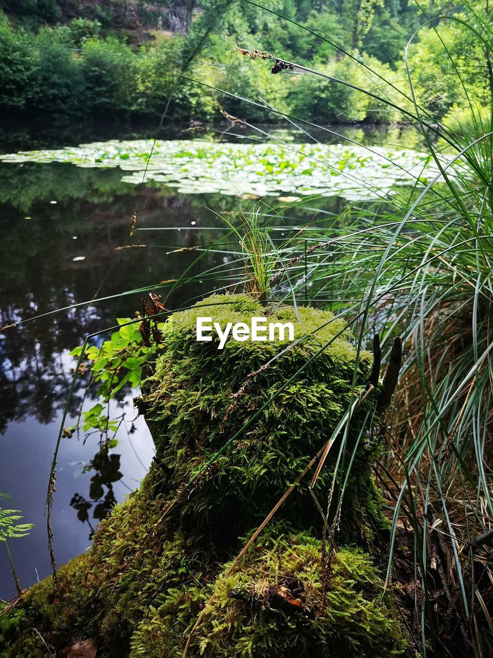 plant, tree, growth, water, tranquility, beauty in nature, nature, forest, day, lake, no people, scenics - nature, green color, tranquil scene, land, reflection, non-urban scene, outdoors, moss