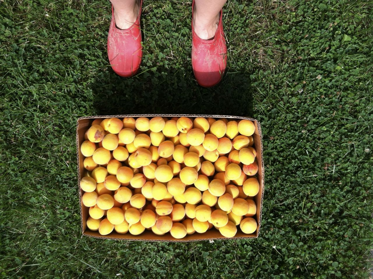 Low section of person standing by peach crate on grass
