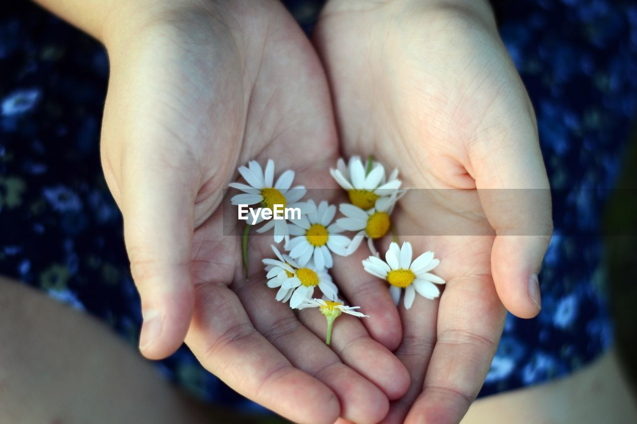 human hand, hand, flower, human body part, flowering plant, holding, real people, one person, freshness, plant, close-up, body part, fragility, lifestyles, inflorescence, high angle view, vulnerability, nature, day, flower head, finger, hands cupped, human limb